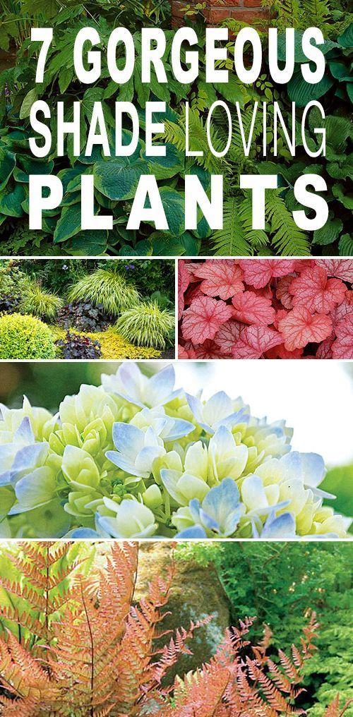 7 Gorgeous Shade Loving Plants Plantas, Jardinería y Afuera - plantas para jardin
