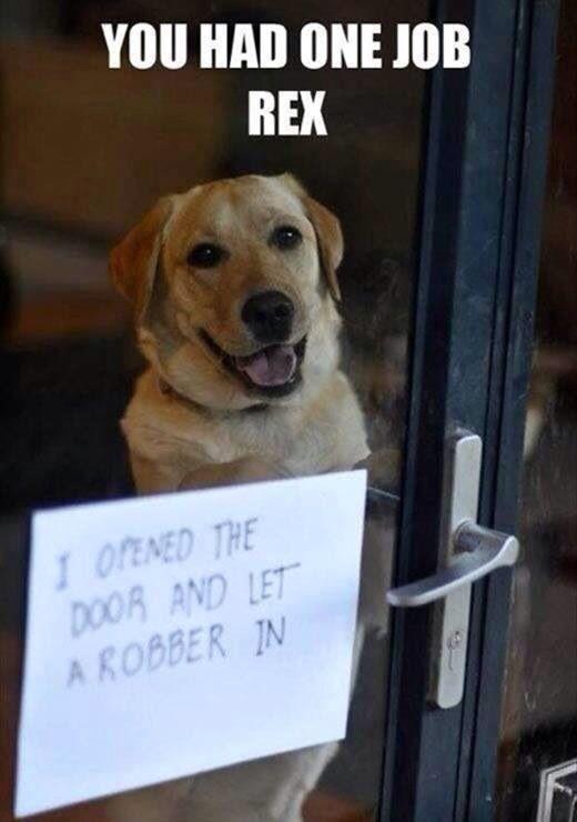 Dog Shaming Let Burglar In House You Had One Job Dog Shaming