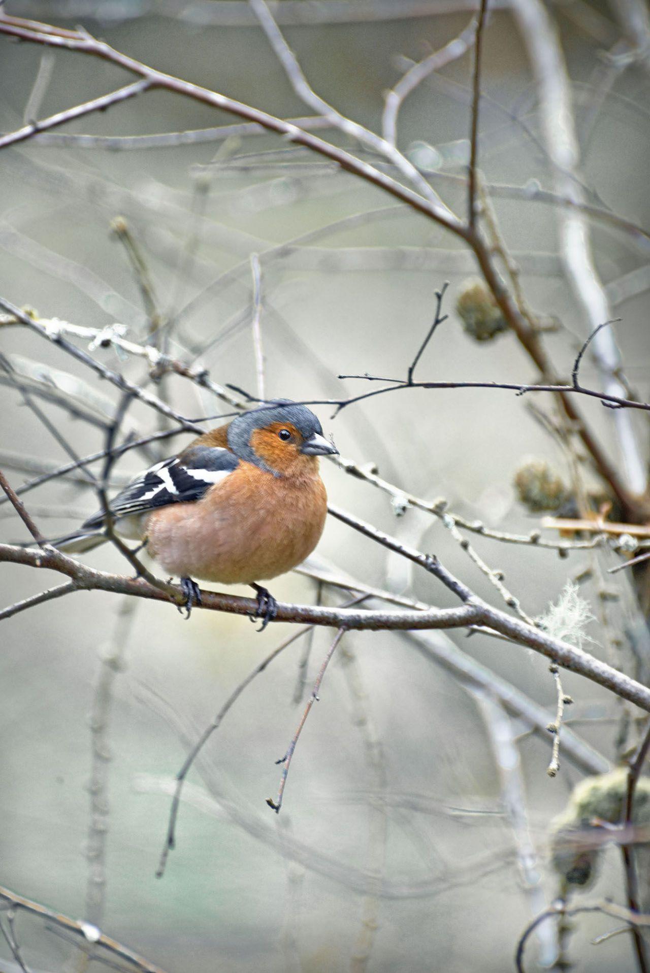 6 garden birds to look out for in winter garden birds wildlife