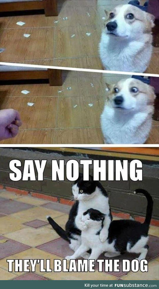 20 Super Funny Animal Memes Funny animals have always been an internet sensation. They've got what it takes to make us laugh, especially when they're turned into memes. Here are our collection of the most funny moments of animals of the internet.