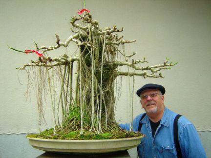 Dwarf Schefflera Bonsai Bonsai Tree Indoor Bonsai Bonsai