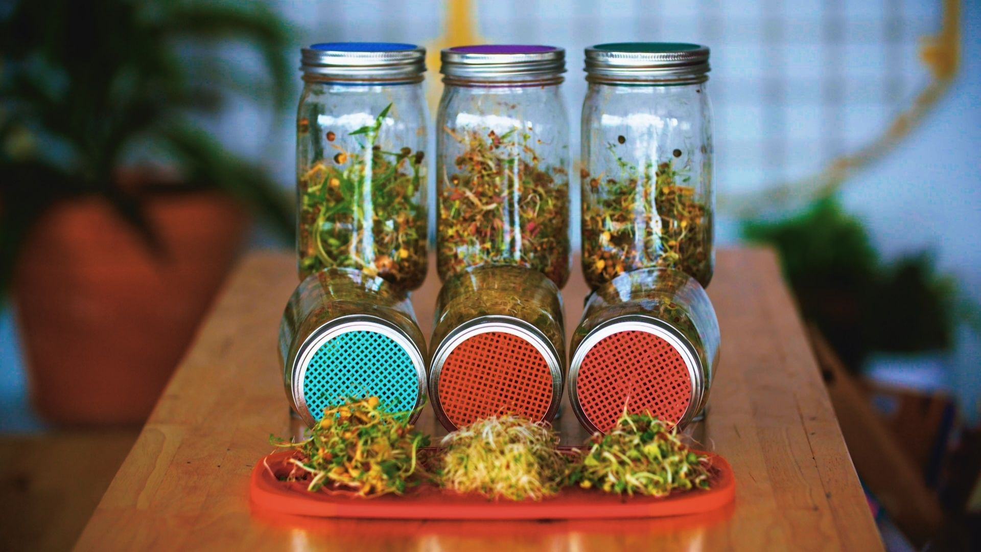Sprout seeds in a jar in just a few easy steps. Growing