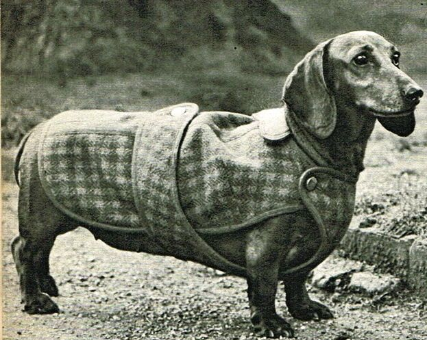 Vintage stylish Dachshund weiner dog coat sewing pattern-full size paper pieces