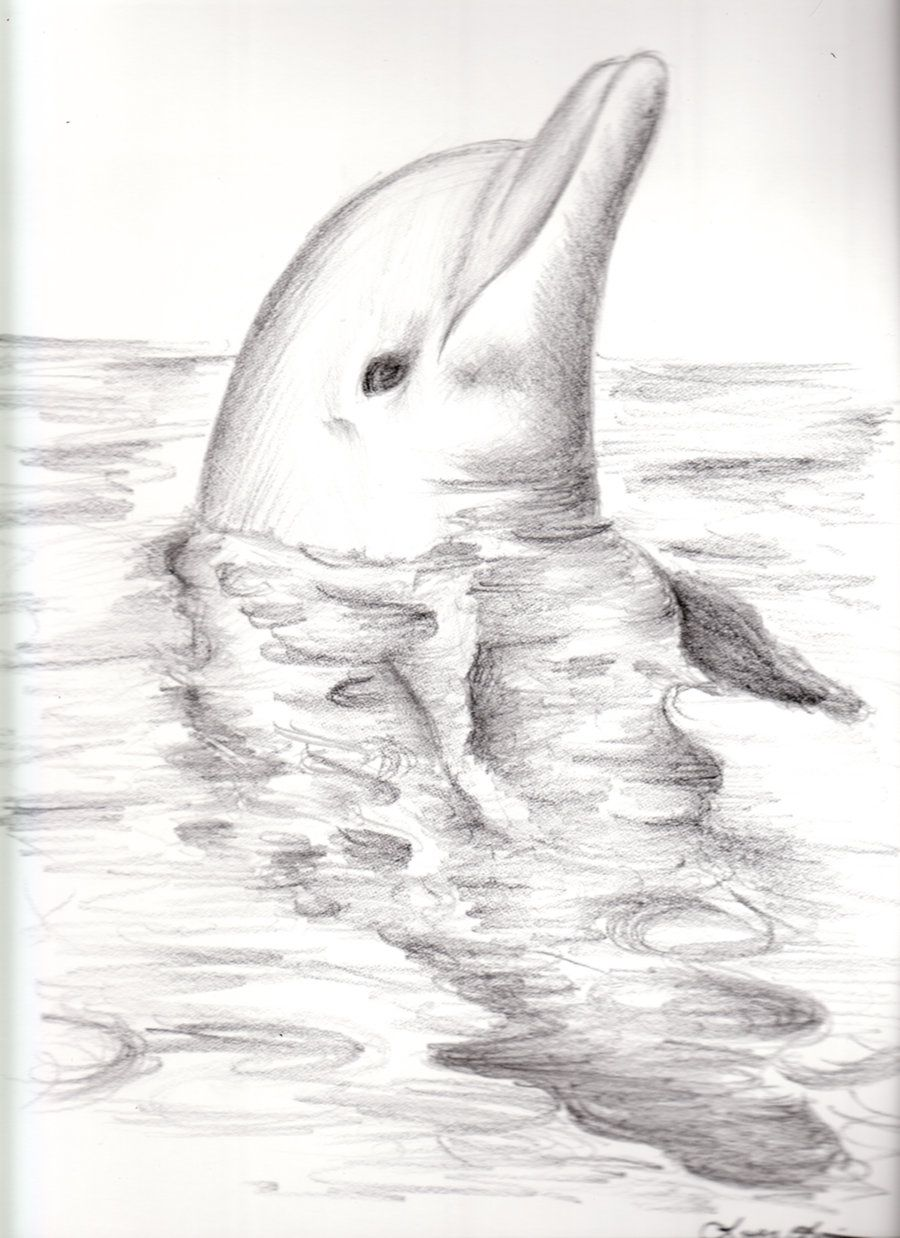 Dolphin by FantasyDreams46 Dolphin drawing