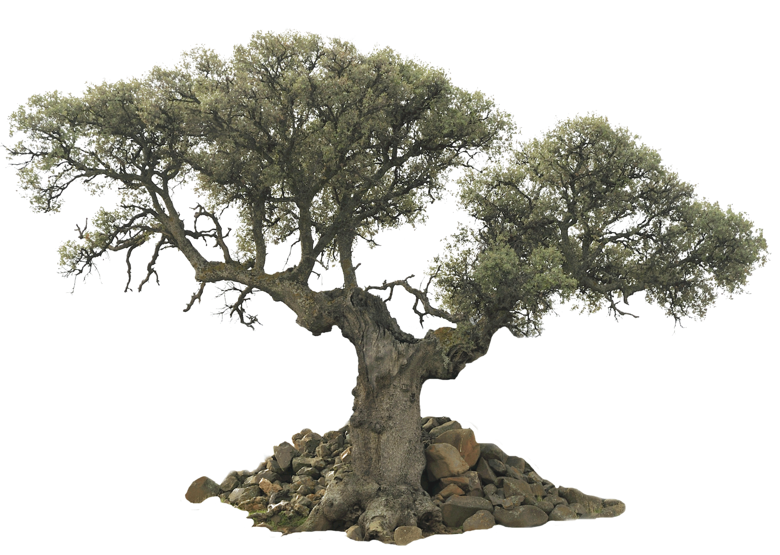 Unusual Tree Png By Evelivesey Deviantart Com Immagini Ringhiera