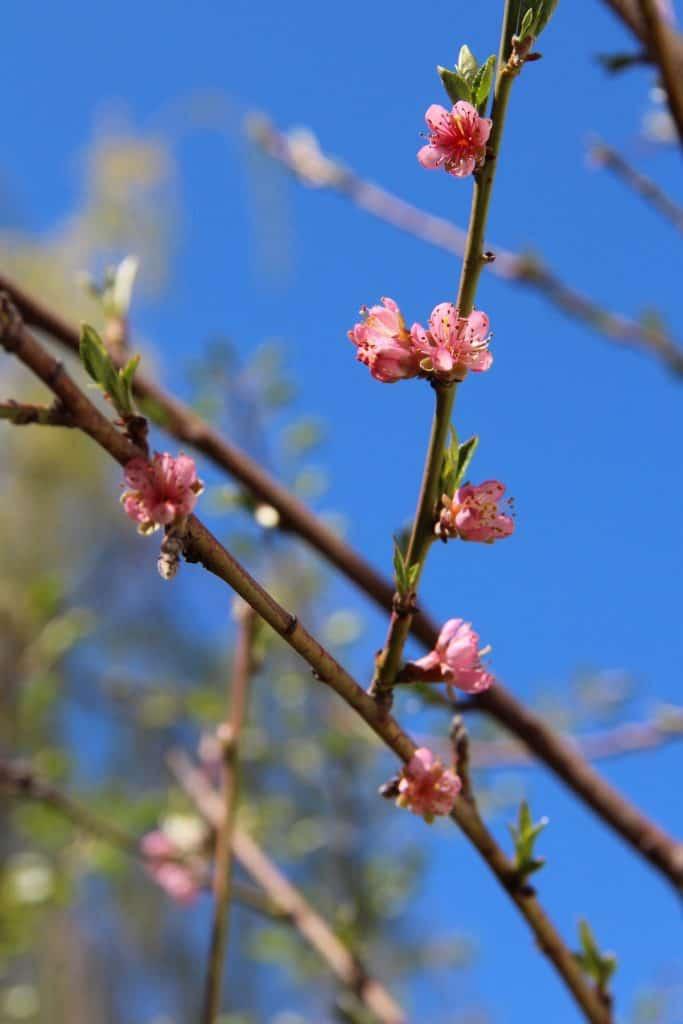 When To Fertilize Fruit Trees Seasonal Timing Tips For Feeding Your Fruit Trees Fruit Trees Fertilizing Fruit Trees Fertilizer