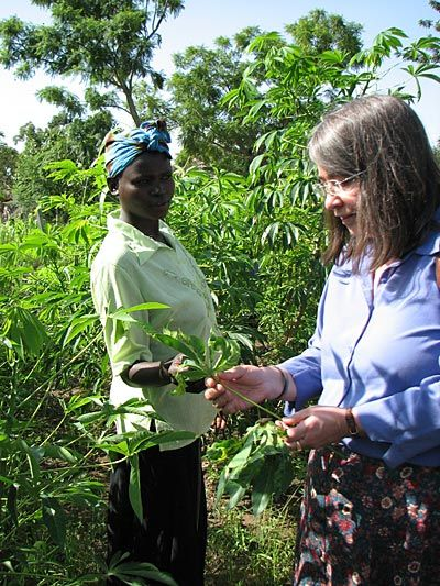 Computer-based education modules created by Cornell University and CRS are helping poor farmers to restore healthy cassava fields in Africa.