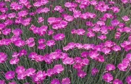 Colorado Native Plants Coloradohardyplants