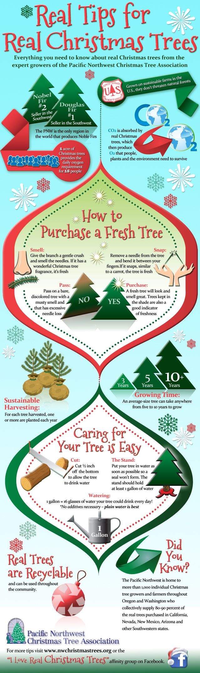 Everything you need to know about REAL Christmas trees straight ...