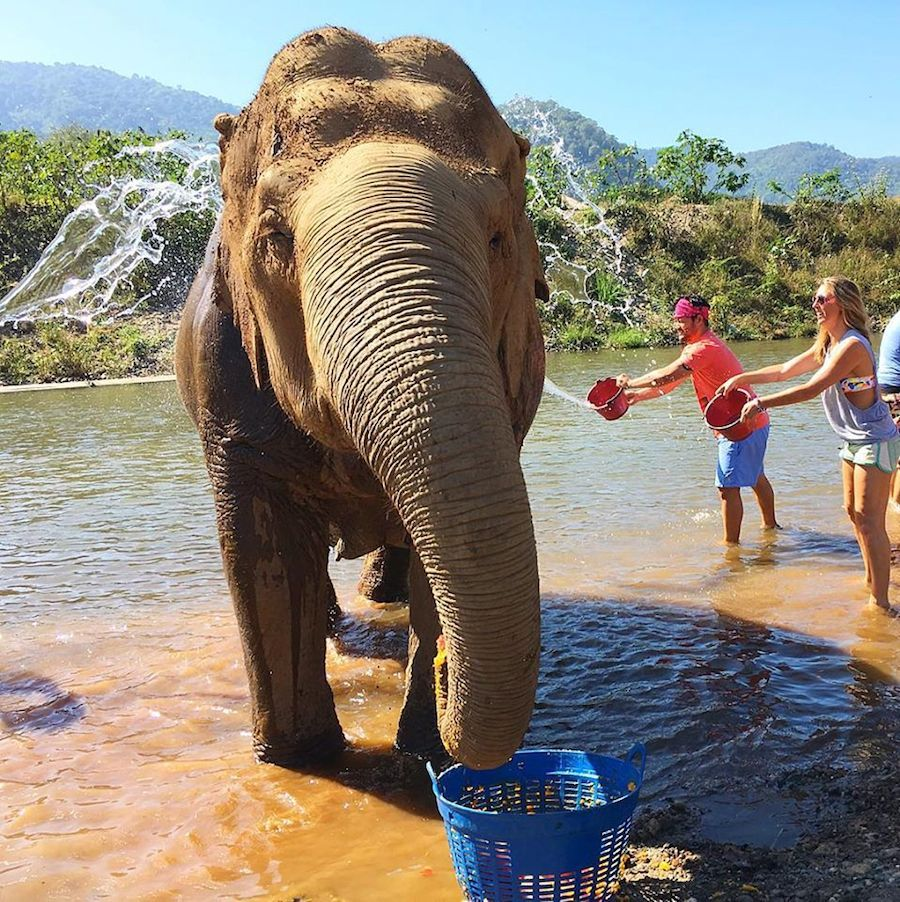A Must-Read for Spotting Ethical Animal Tourism in Thailand