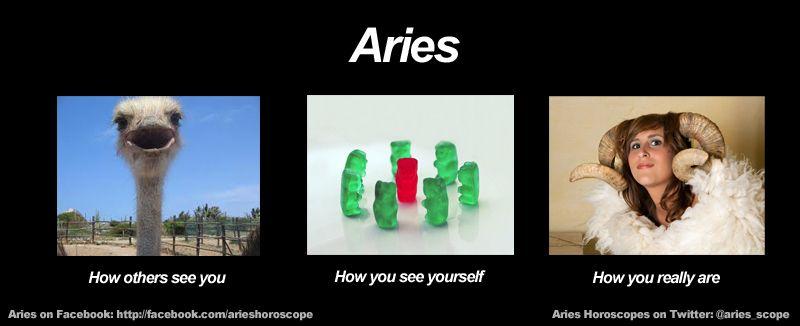 Haha Yeeeaahhhh That Meh Aries Star Sign Aries Horoscope