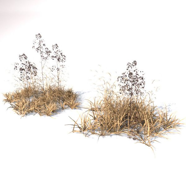 Dead Grass Png Google Search Fotomontaje Paisajismo Vegetacion