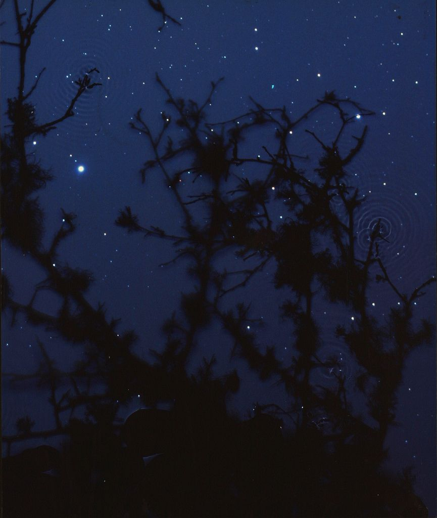 Star Field - Blackthorn - Susan Degres