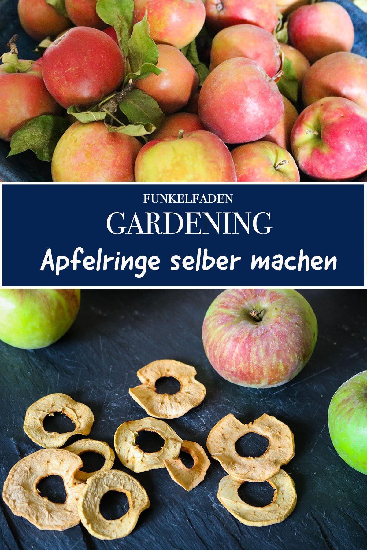 Urban Gardening - Rezepte für wild gepflückte Äpfel aus Berlin