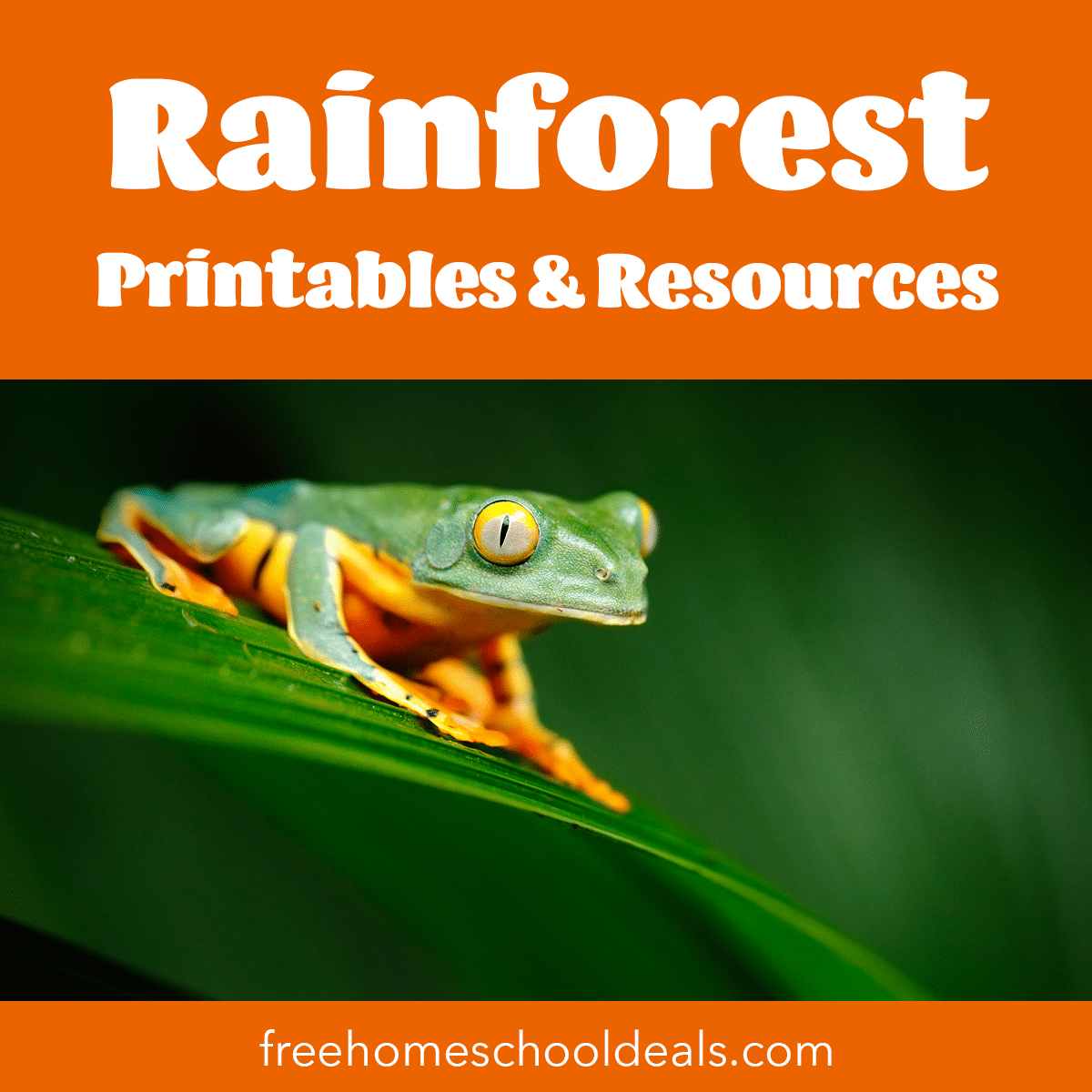 Free Rainforest Printables Amp Resources