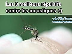 Fatigué de moustiques? Cette astuce facile les empêchera de gâcher vos soirées d'été!   – Astuces