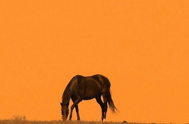 Jamie McAlpin Photography