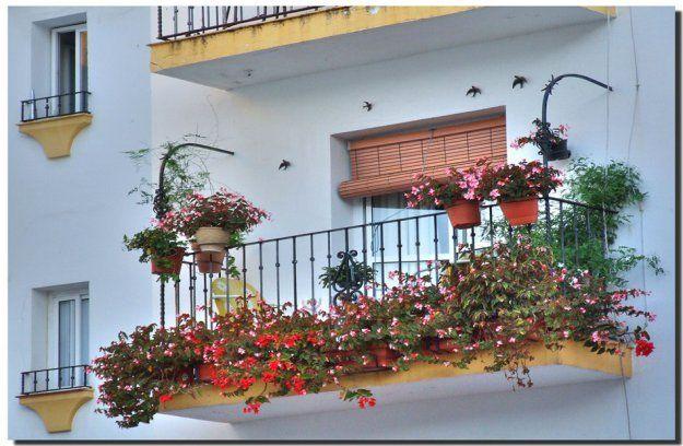 Bilder av blommor - Foto blommar