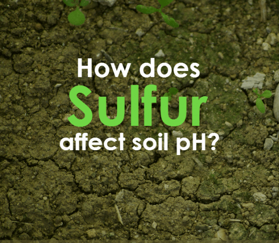 77993e4f5eda05750d54509ef16d54ff - How Does Ph Affect Plant Growth And Gardeners Gardens