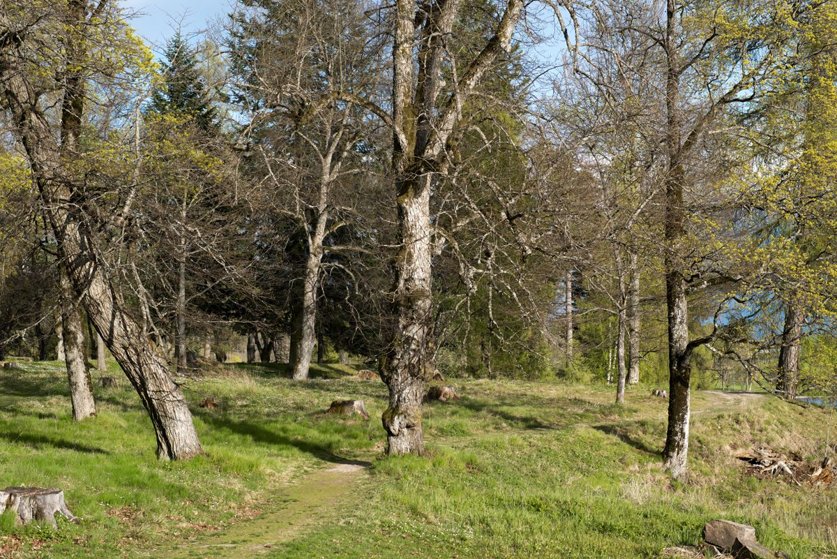 Early Spring trees at Bogstad Gård, Sørkedalen, Oslo, Norway