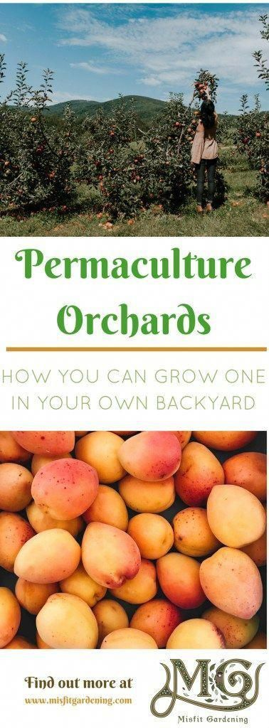 a Permaculture Orchard: How to Grow More Food In Your Backyard Permaculture orchards and food forests allow you to grow more food in your backyard. Click to find out how to start a backyard permaculture orchard or pin it and save for laterPermaculture orchards and food forests allow you to grow more food in your backyard. Click to find out how to star...