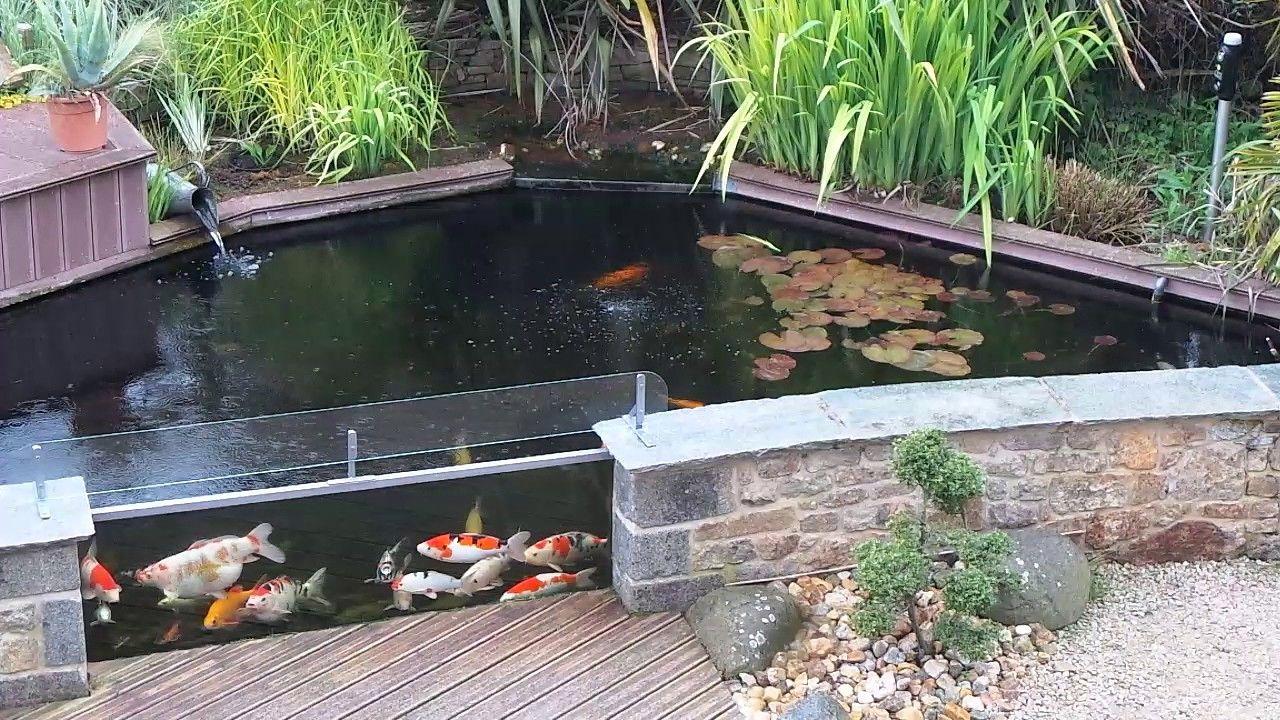 Bassin De Jardin Hors Sol en 8  Bassin de jardin, Bassin hors