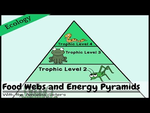 Food Webs And Energy Pyramids Bedrocks Of Biodiversity Energy Pyramid Food Web Cool Science Experiments