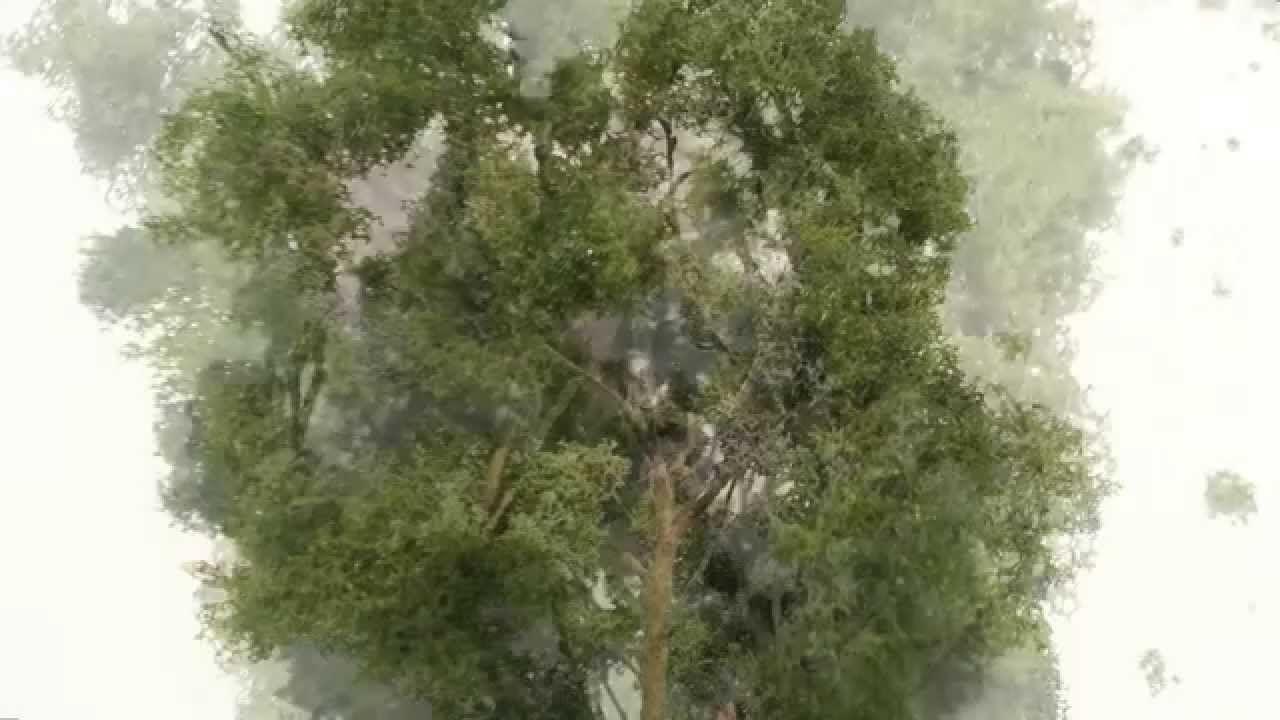 How To Make Model Trees Bäume Selber Bauen Building Model