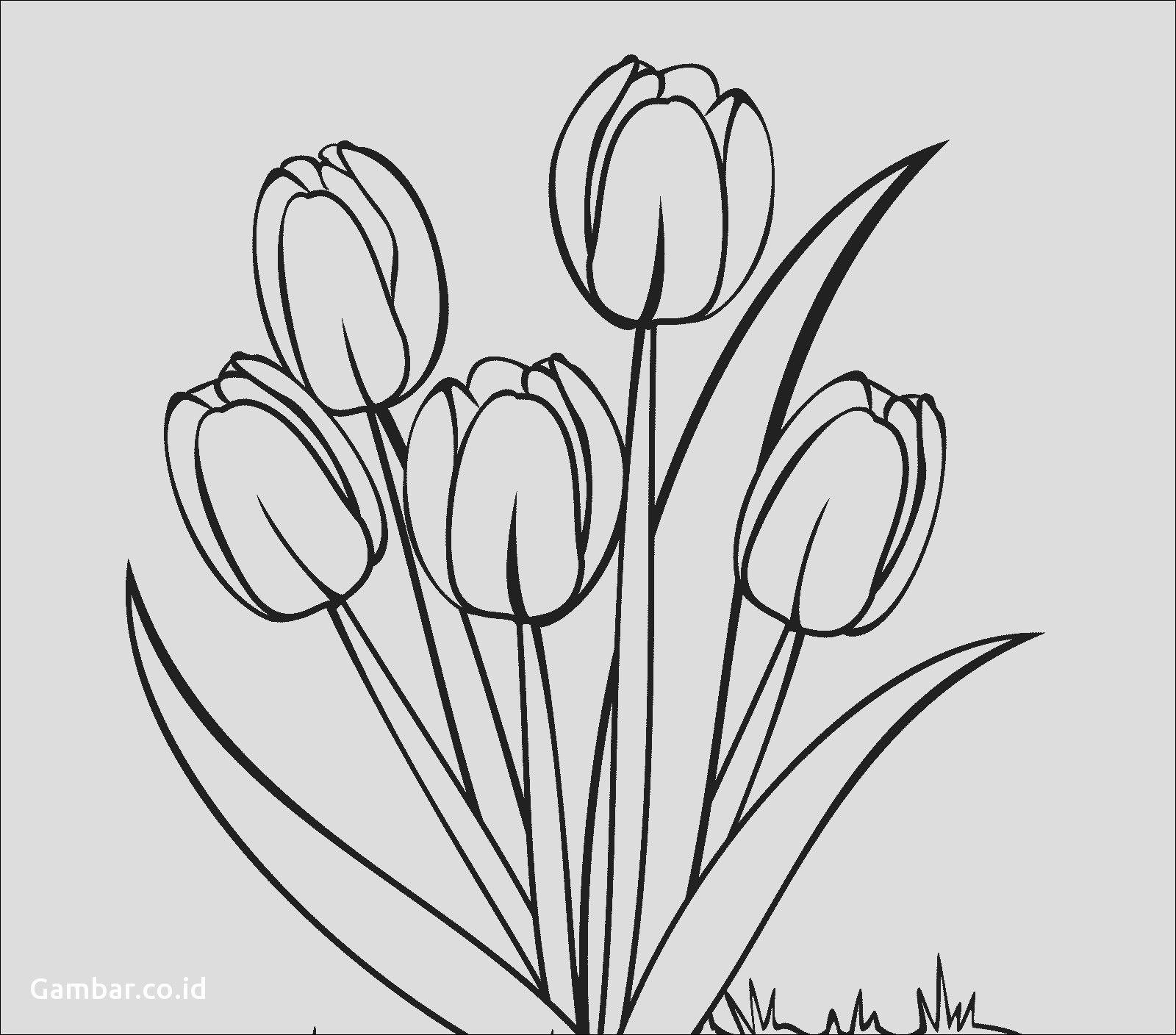 Sketsa Gambar Bunga Dalam Pot – Cuitan Dokter