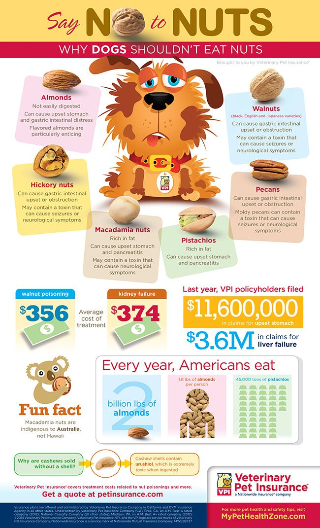 Dog infographic, Can dogs eat