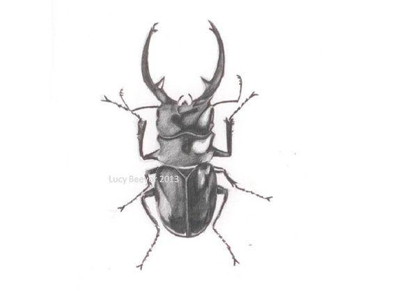 stag beetle original drawing in pencil designs drawing