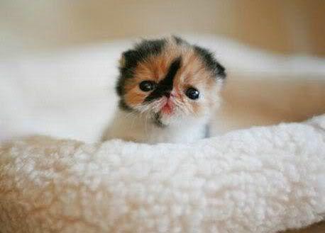 Tiny Itty Bitty Kittens Cute Kittens Sopoja Elaimia Kissanpennut