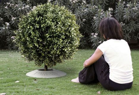 Poetree A Funeral Urn That Lets You Plant A Tree From Ashes