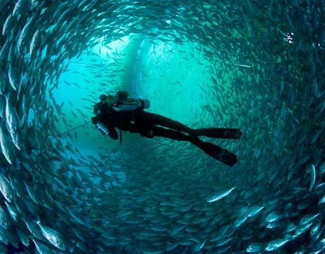 Is It Strange That My First Thought Was Of The Tuna In Finding Nemo Diver With Rebreather Inside Underwater World Underwater Pictures Underwater Photography