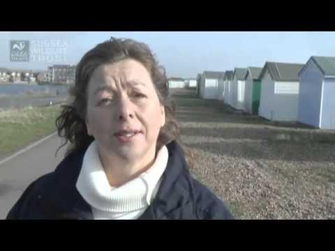 Seas in Crisis: Sussex Wildlife Trust Marine Appeal