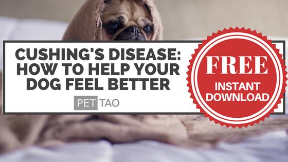 The Dog Owner's Guide to Cushing's Disease Cushing