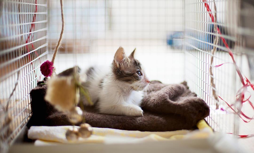 Walmart Ideas Walmart Com Cat Carrier Cats Cat Fleas