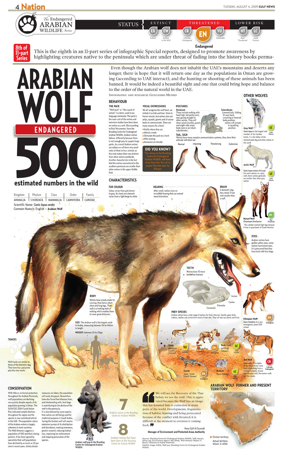 Arabiam Wolf In 2020 Animal Infographic Endangered Infographic