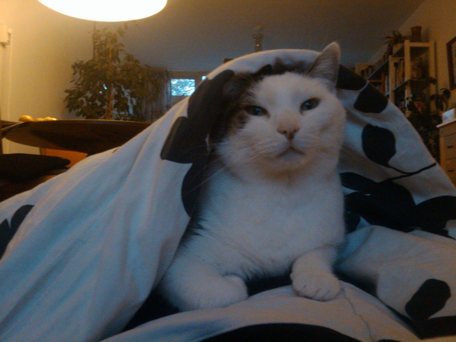 Good Morning ! Teun the cat