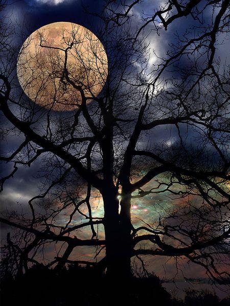 Nacht, Baum, Mond, Fotografie, Mondschein