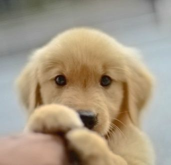 My heart has melted. I just....can't handle how bad I want a new puppy