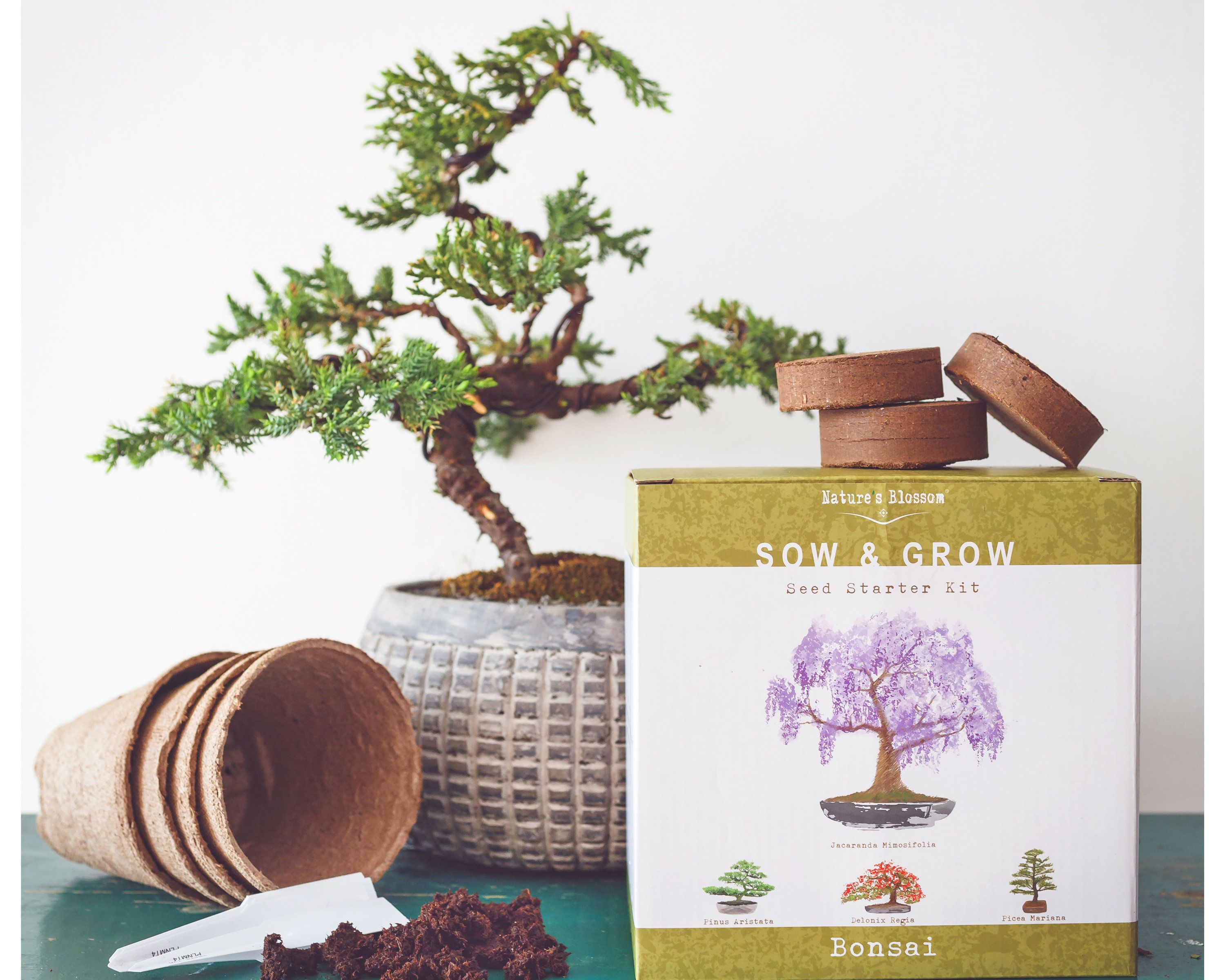 Excited To Share Our Newest Etsy Listing Nature S Blossom Bonsai Tree Kit Grow 4 Types Of Miniature Bonzai Bonsai Tree Types Bonsai Tree Indoor Bonsai Tree
