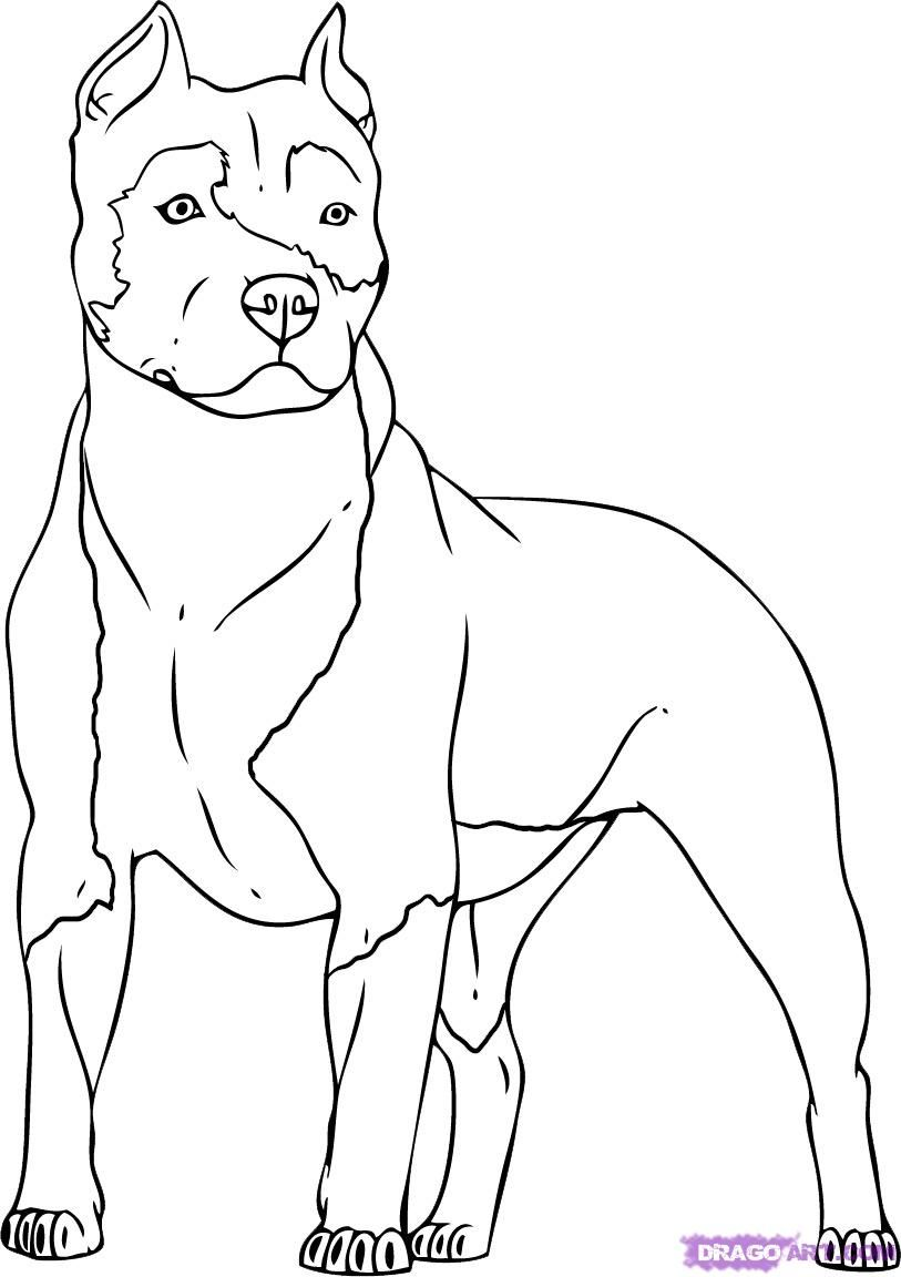 Step Two Pitbull Drawing Dog Coloring Page Dog Drawing