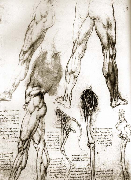 leonardo da vinci anatomy - Google-søgning | Art Renaissance ...