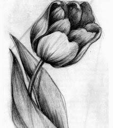 طريقة رسم وردة بقلم الرصاص للمبتدئين Dz Fashion Charcoal Art Art Drawings Sketches Creative Charcoal Sketch