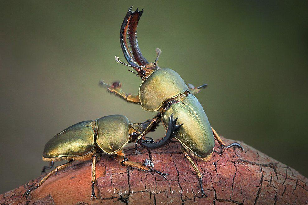 популярностью жуки картинки и фотографии дмитриева
