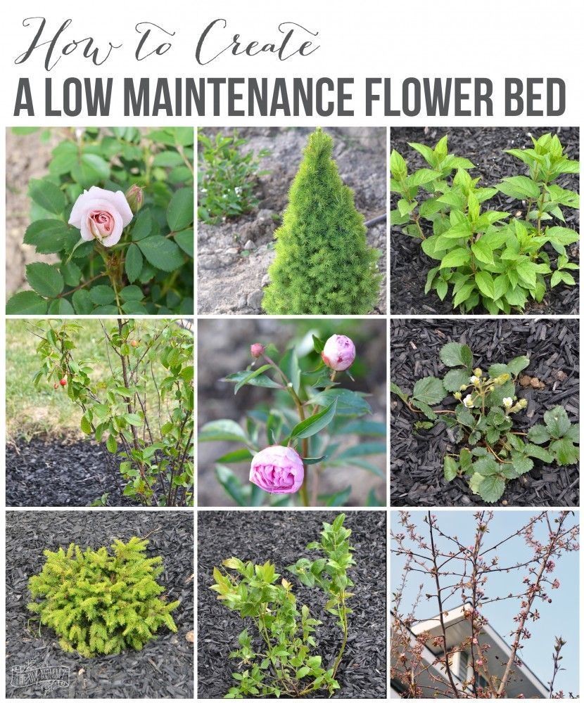 create a low maintenance flower bed our front yard on beautiful front yard rock n flowers garden landscaping ideas how to create it id=12430
