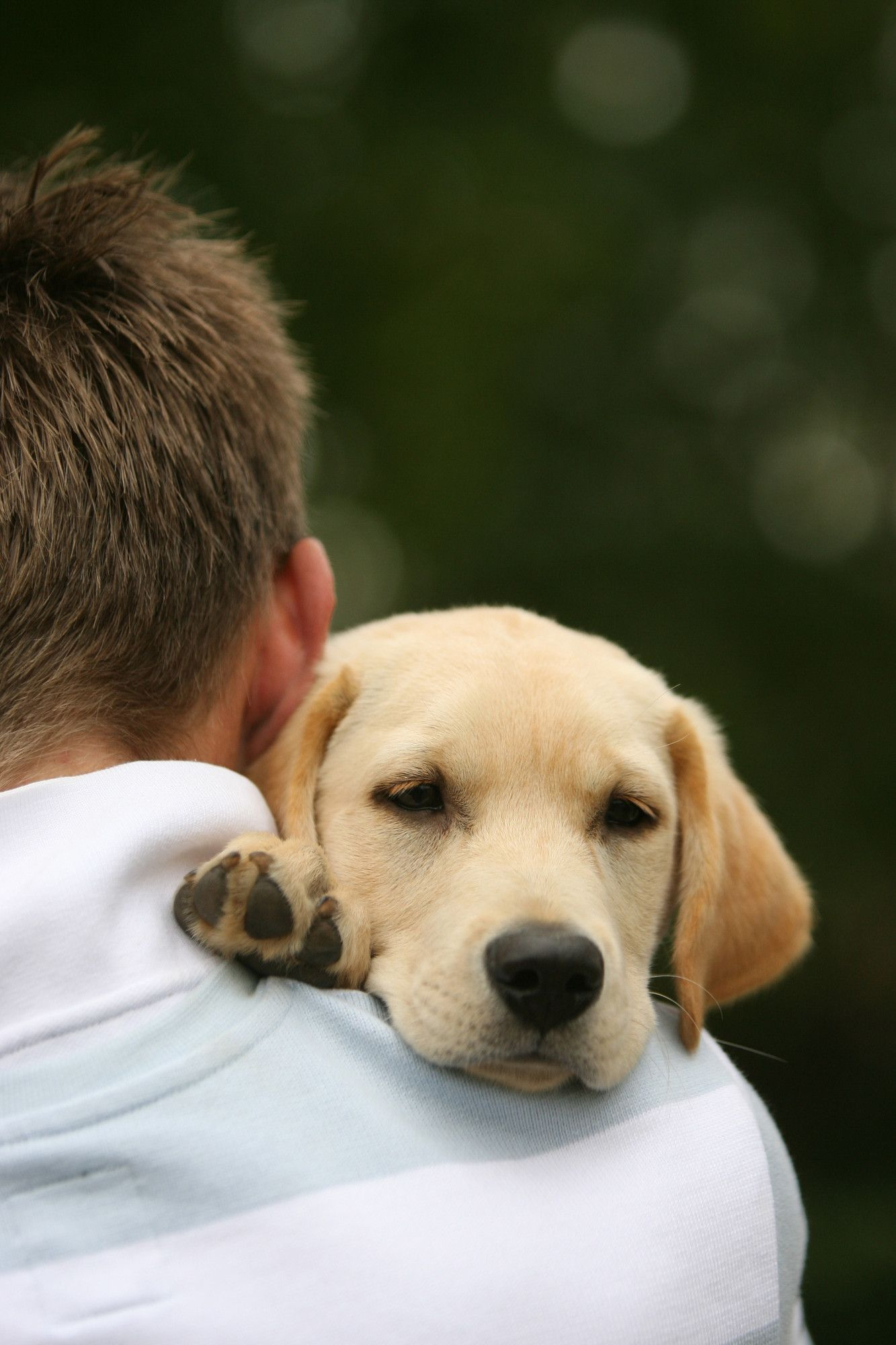 Caring for your puppy Puppies, Puppy socialization, Dog