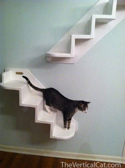 Our Innovative Wall Mounted Cat Stairs Allow Cats To Go Up In The Most Unique Way Stair Is A Great Option For Environment Enrichment You