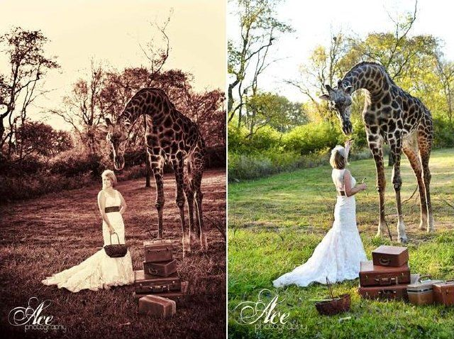 Zoo Wedding That Is Right Weddings At The Chaffee Will Soon Be Available For